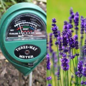 Lavender soil pH