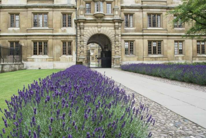 Lavender Hedge Spacing The Definitive Guide Gardener Report