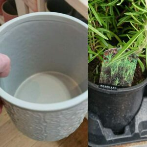 Pots and drip trays retain too much water for rosemary.