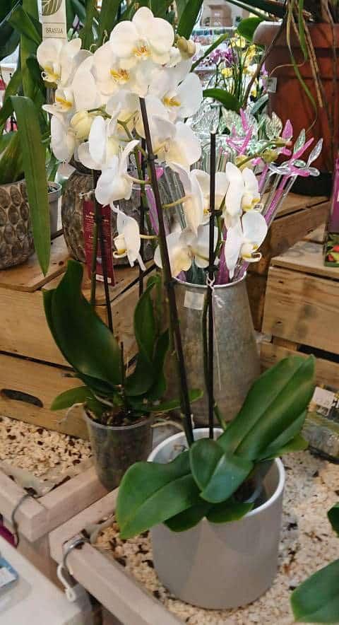Best pots for growing orchids